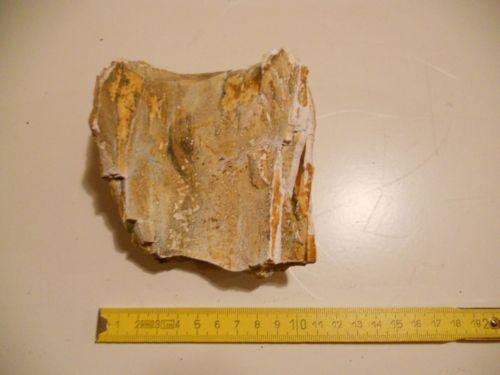 fossile - SELVA DI CADORE (BELLUNO)